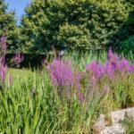 Ihr bienenfreundlicher Garten