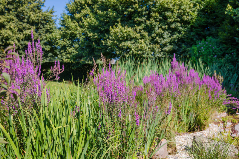 Bienenfreundlicher Garten mit den richtigen Pflanzen