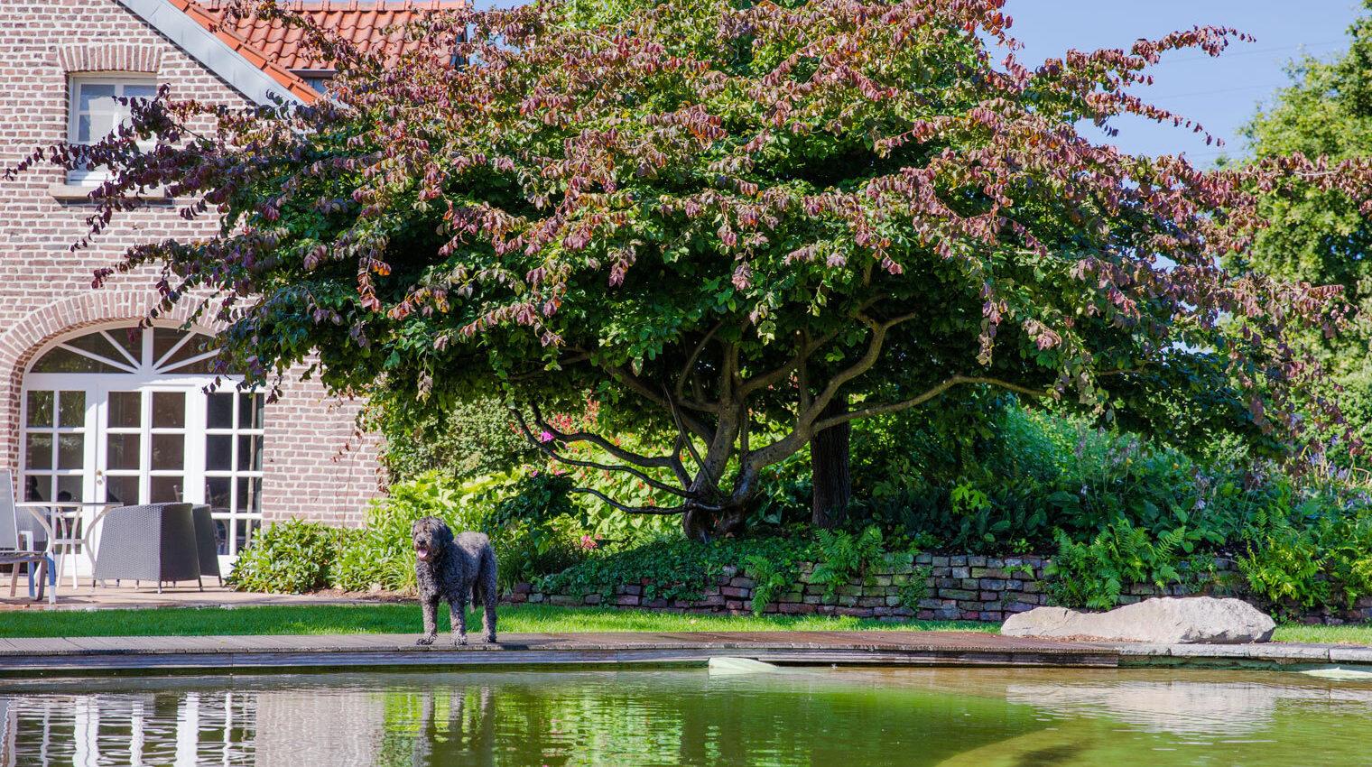 Schwimmteich oder Swimminpool: Hund hinter einem Schwimmteich