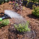 Pflanzen richtig gießen im Sommer